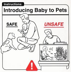 Baby Pet Introduction