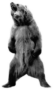 angry_bear