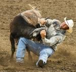 Bull Wrestling euro-webonlin